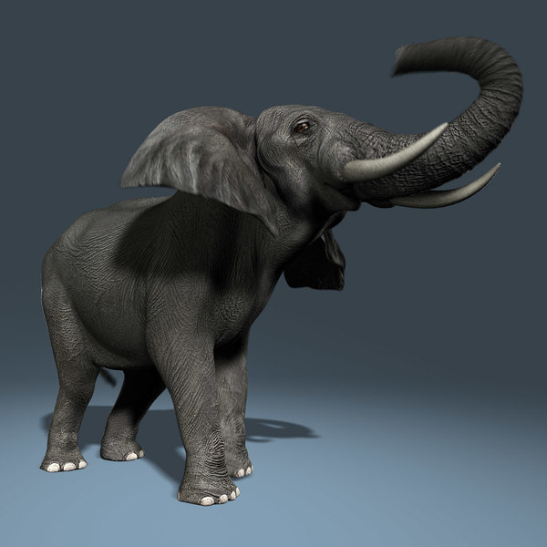 African Elephant (2) (ANIMATED) 3D Models