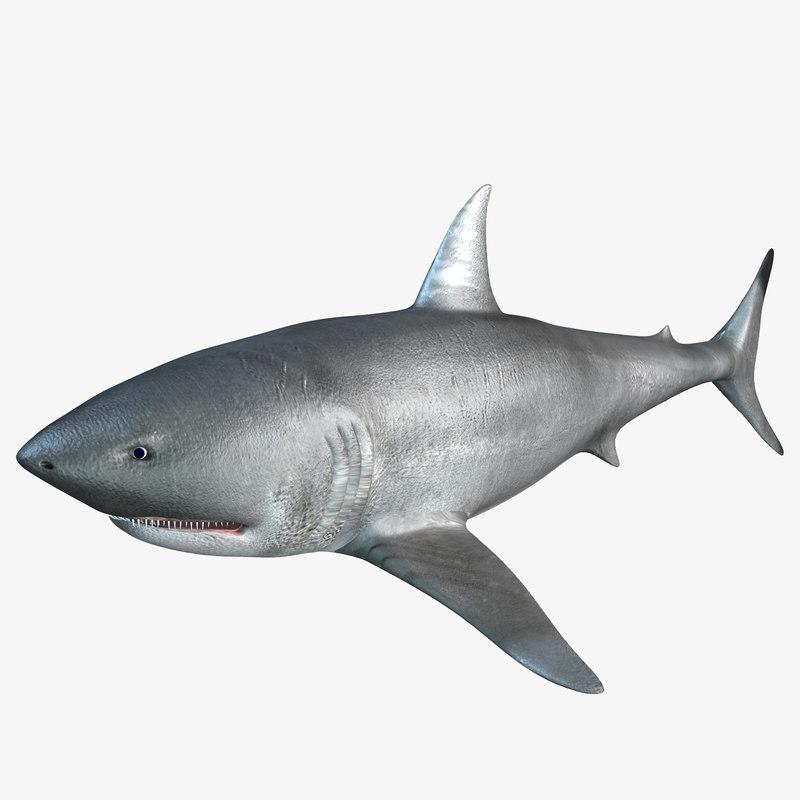 shark-0009.jpg