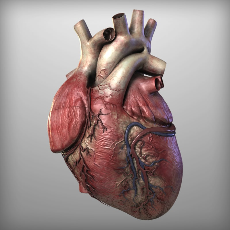 Real human heart images - photo#4