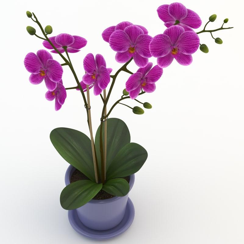 Orchid Violet