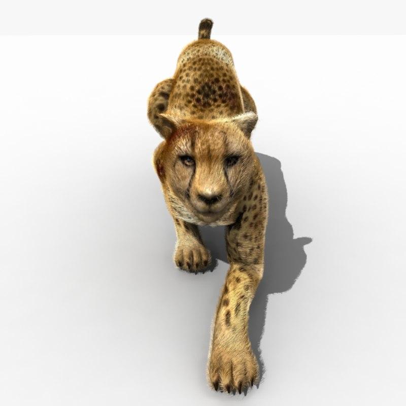 Cheetah (ANIMATED) (FUR)