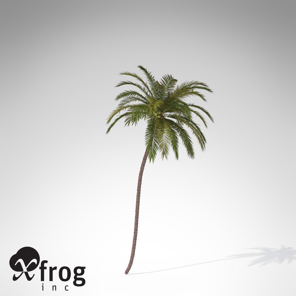 XfrogPlants Coconut palm 3D Models