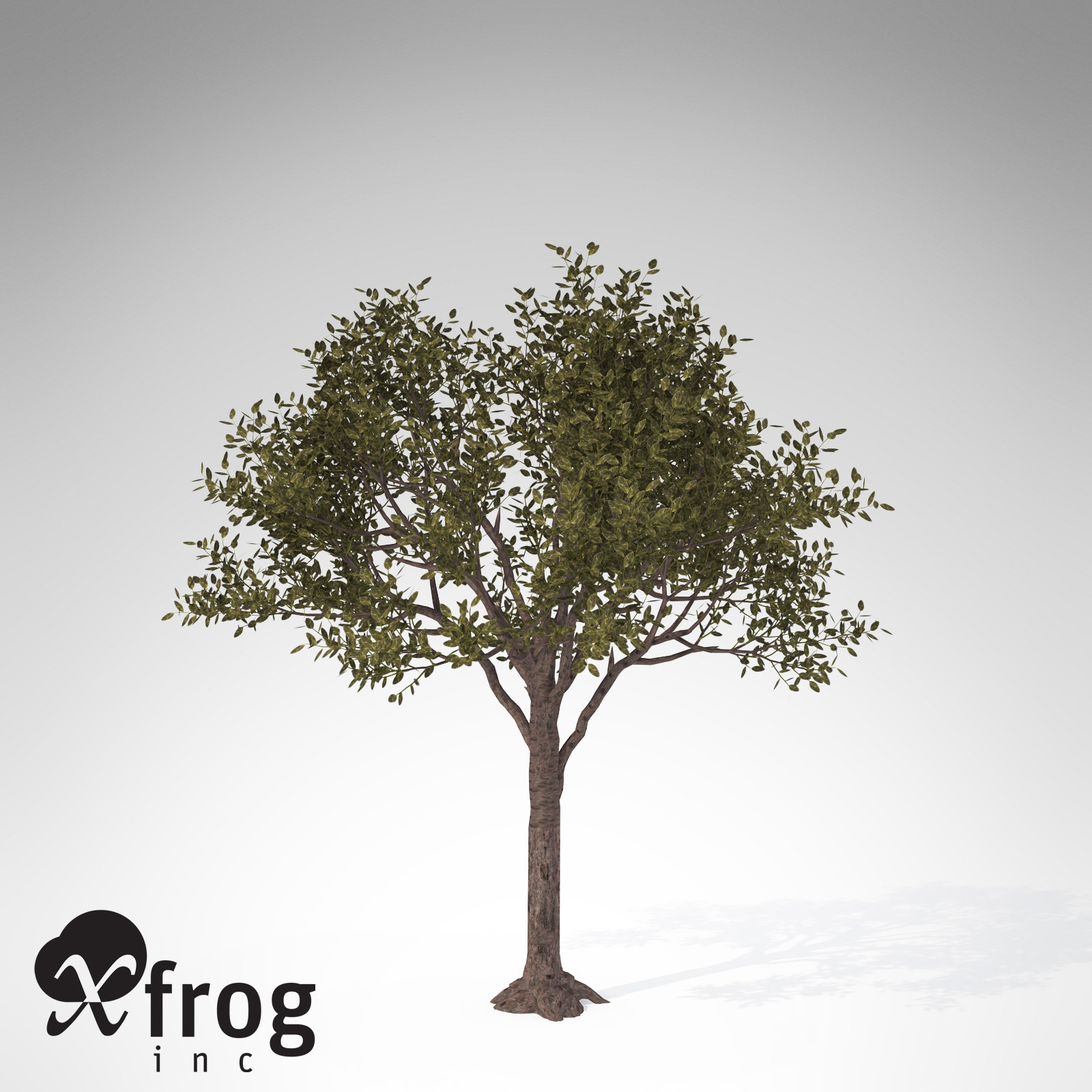 XfrogPlants Rubber tree