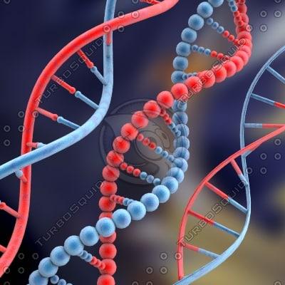DNA set 3D Models