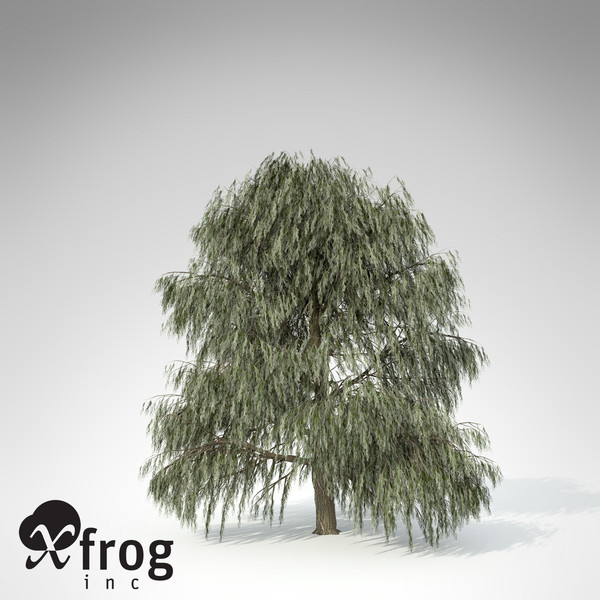 XfrogPlants Weeping Willow 3D Models