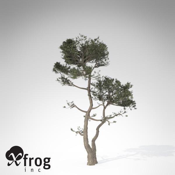 XfrogPlants Monterey Cypress 3D Models