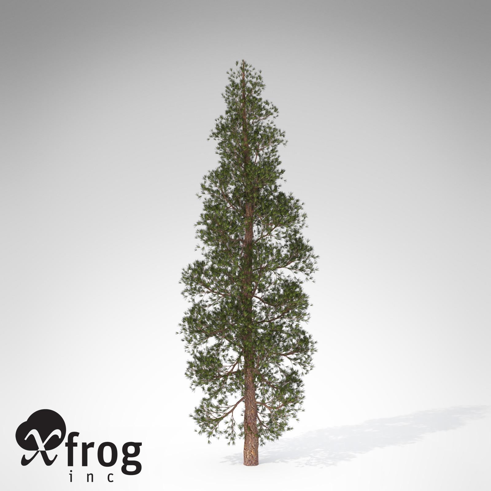 3d model xfrogplants ponderosa pine tree