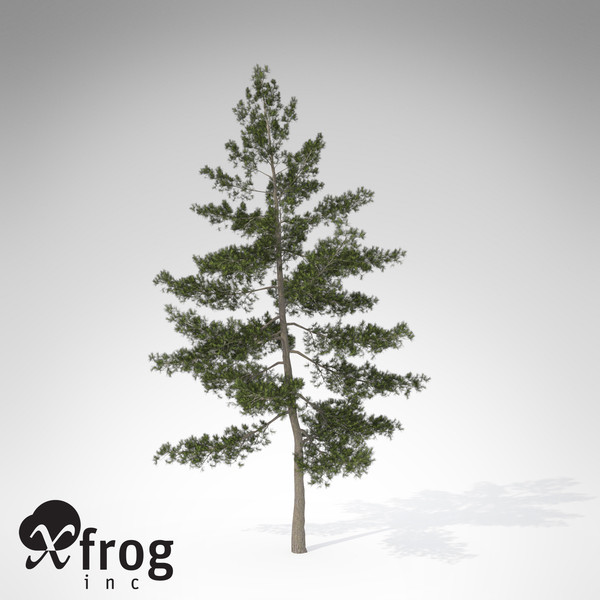 XfrogPlants Eastern White Pine 3D Models
