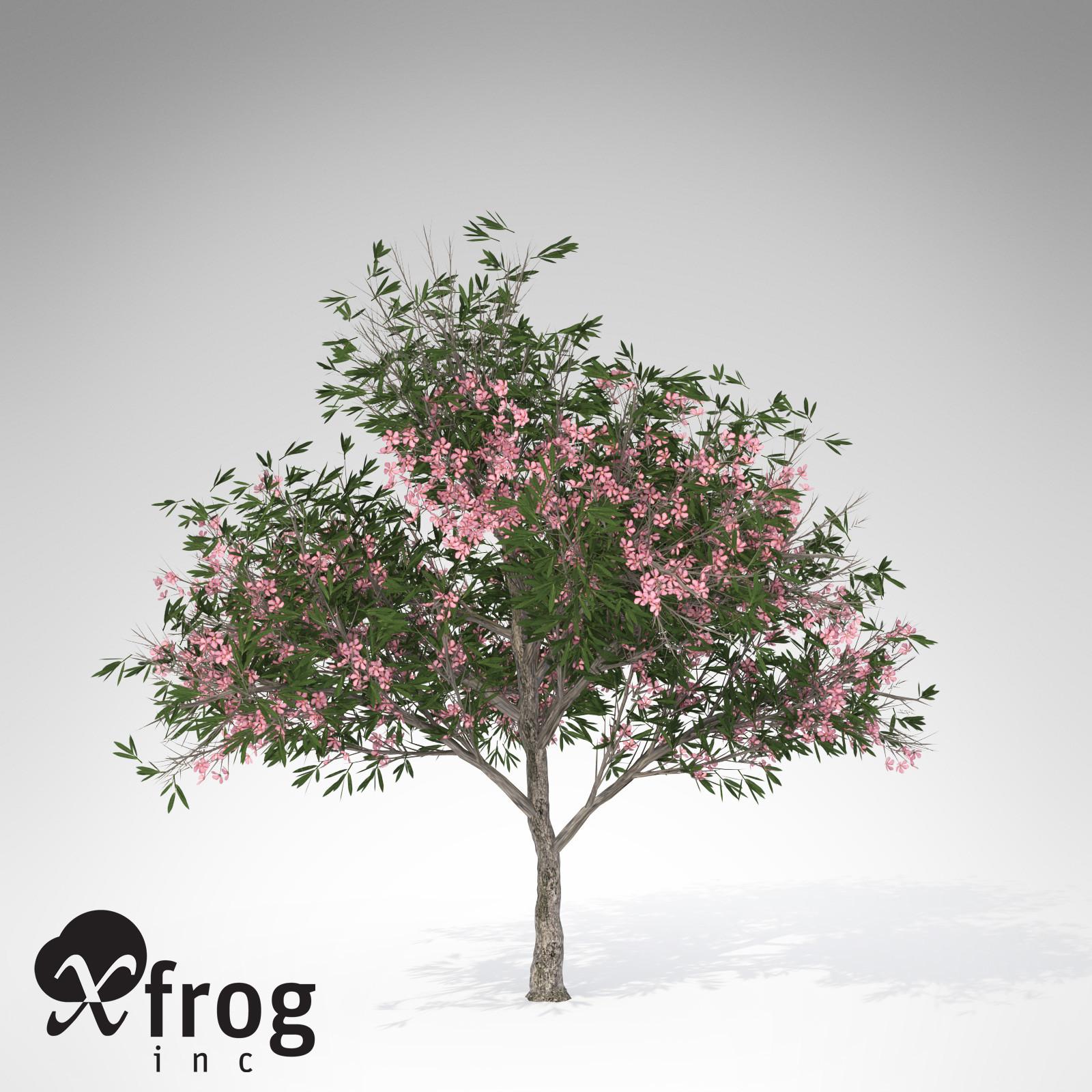 XfrogPlants Oleander