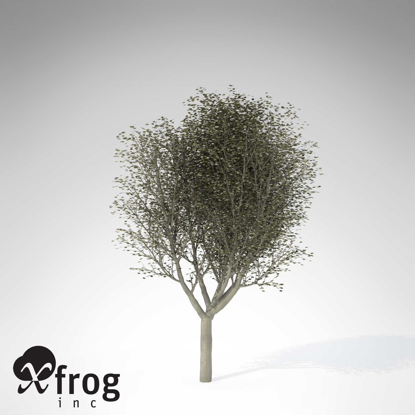 XfrogPlants Silver Linden