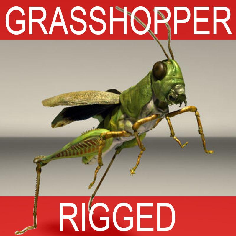 GRASSHOPER_RIGGED_TB.jpg