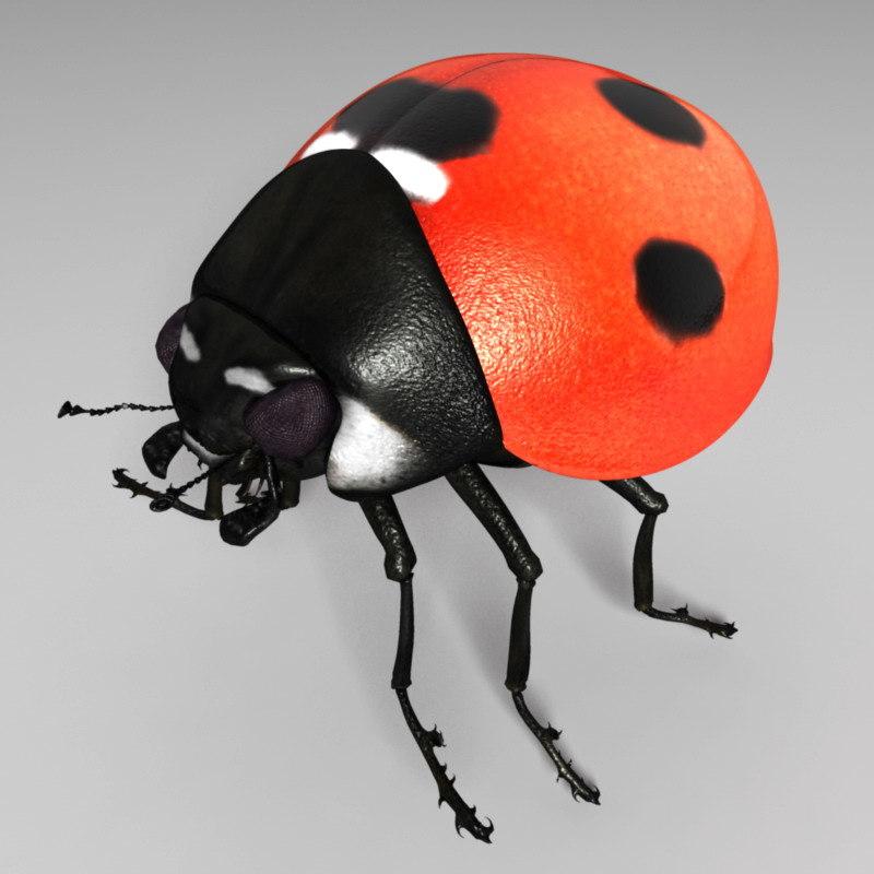 ladybug_render_01.jpg