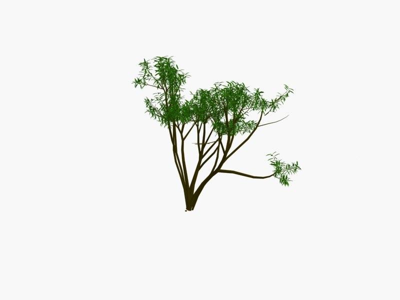 tree1pack5.jpg