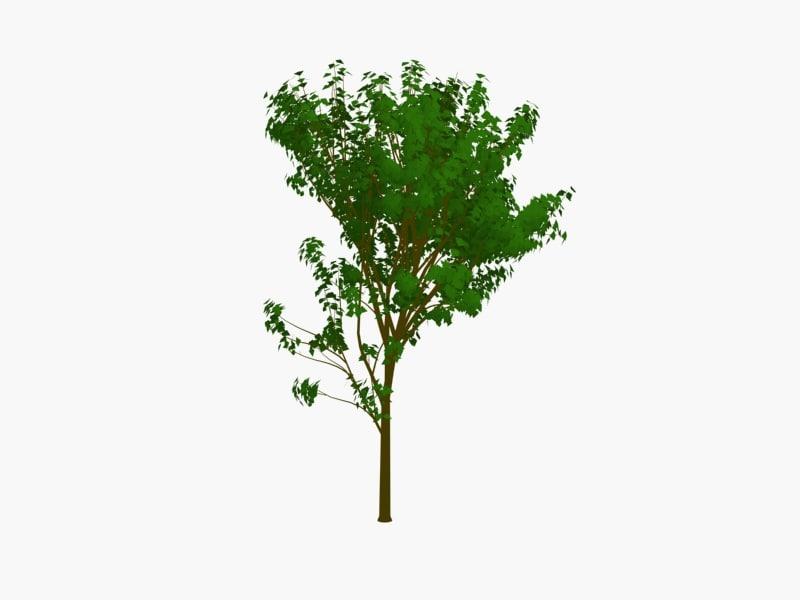 tree1pck3.jpg