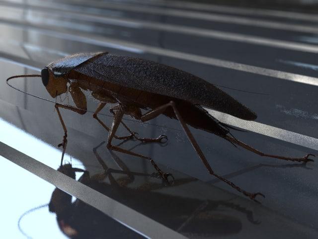 roach-image01.jpg