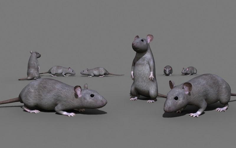rat02high.jpg