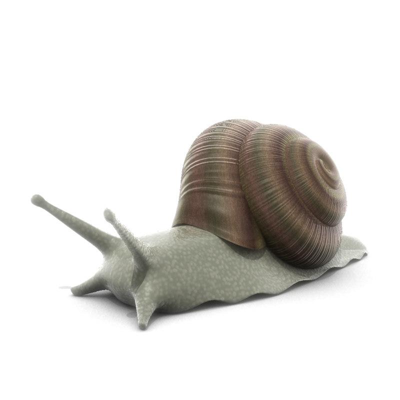 snail.00.jpg