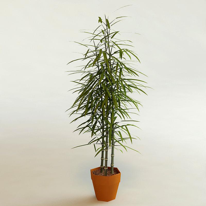 bamboo_00.jpg