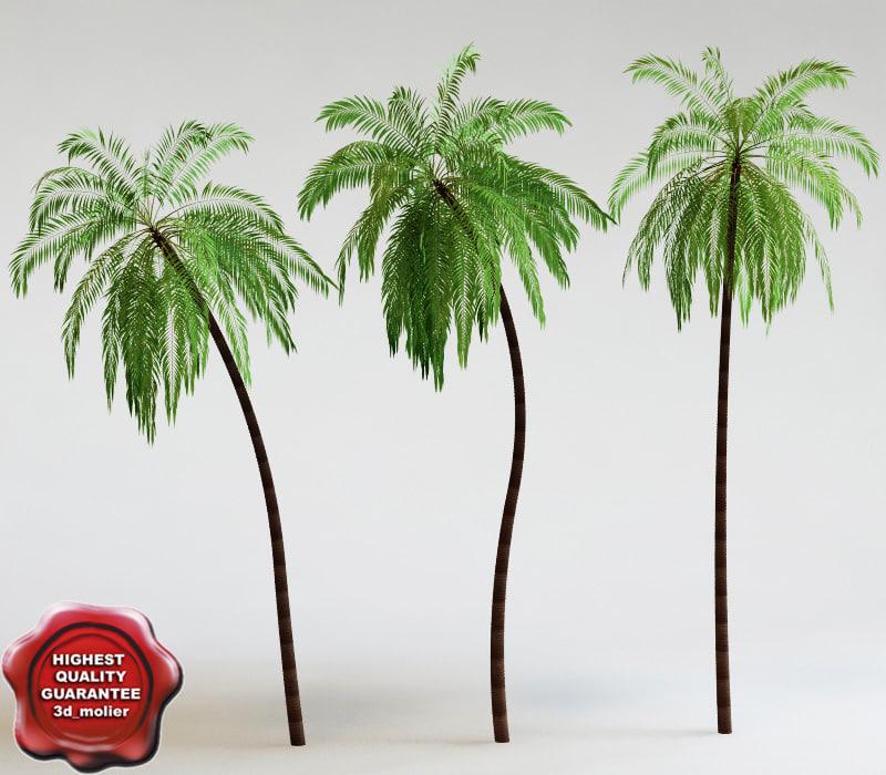 Palm_V1_00.jpg