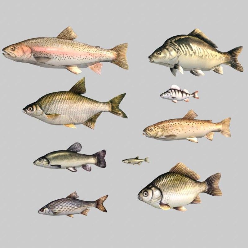 fish.1.jpg