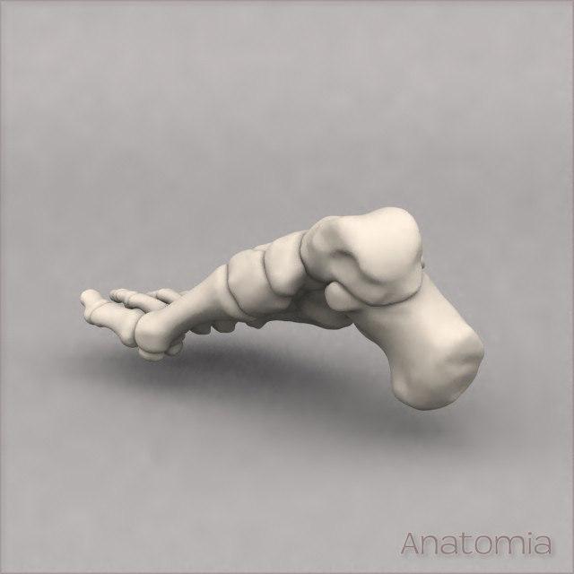 Foot-Back-3qtr.jpg
