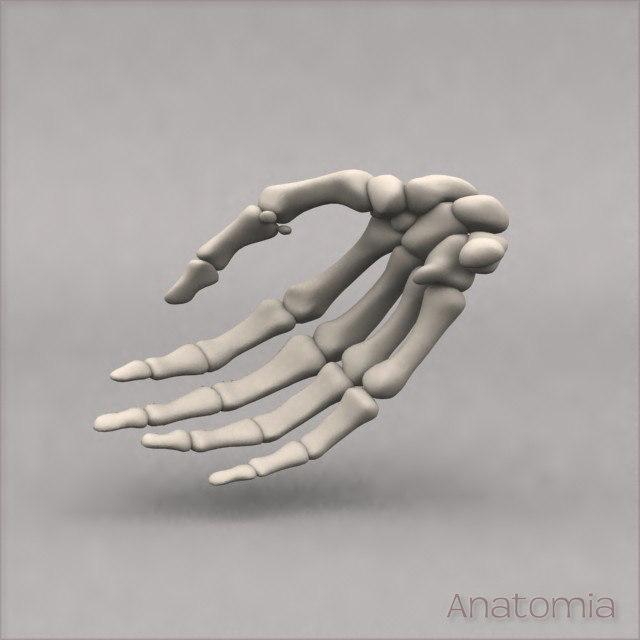 Hand_Back.jpg