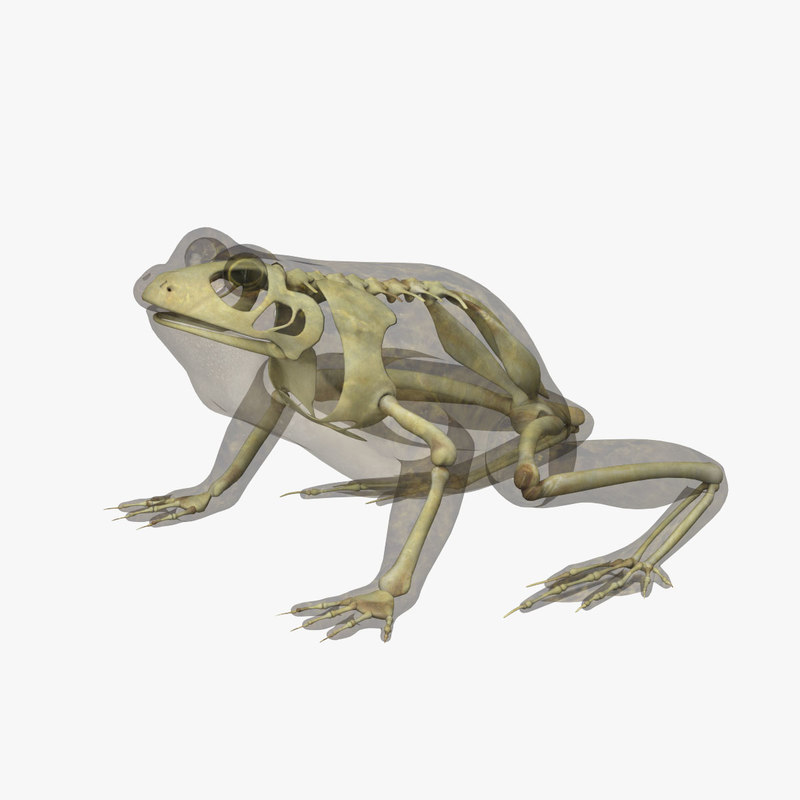 SkeletonFrog_1.jpg