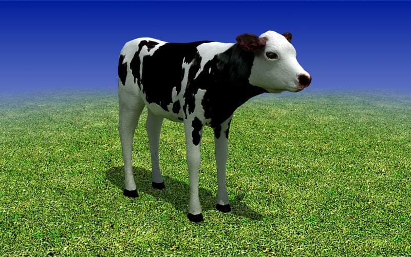 sample_01_calf_cow_3d_model_main.jpg