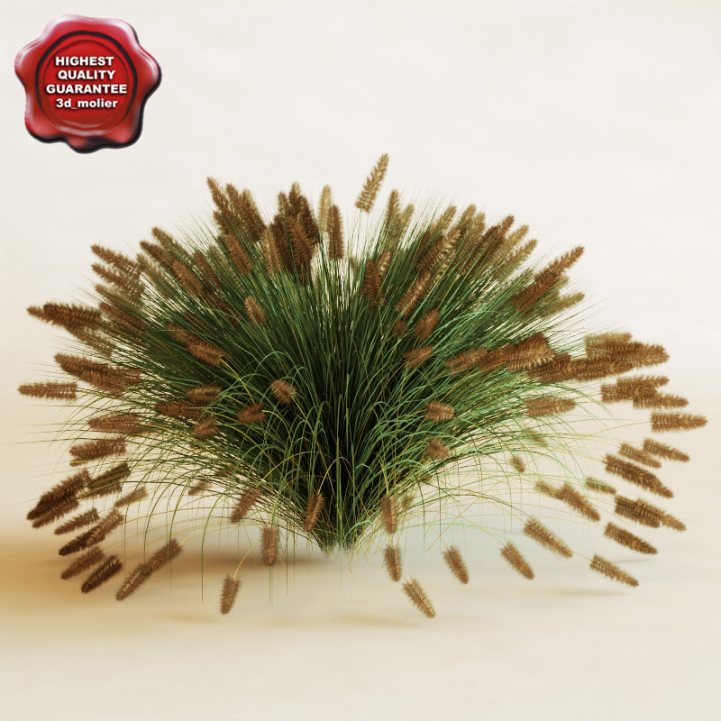 Fountain_Grass_0.jpg