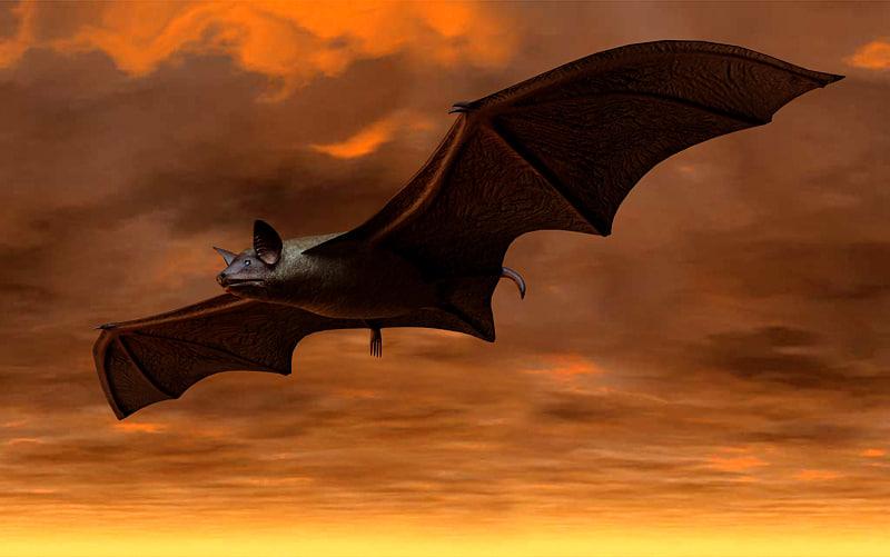 Brown Bat 3D Model