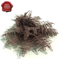 burgundy lace painted fern 3D models