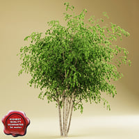river birch 3D models