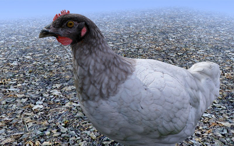 chicken_3D Model_sample04.jpg