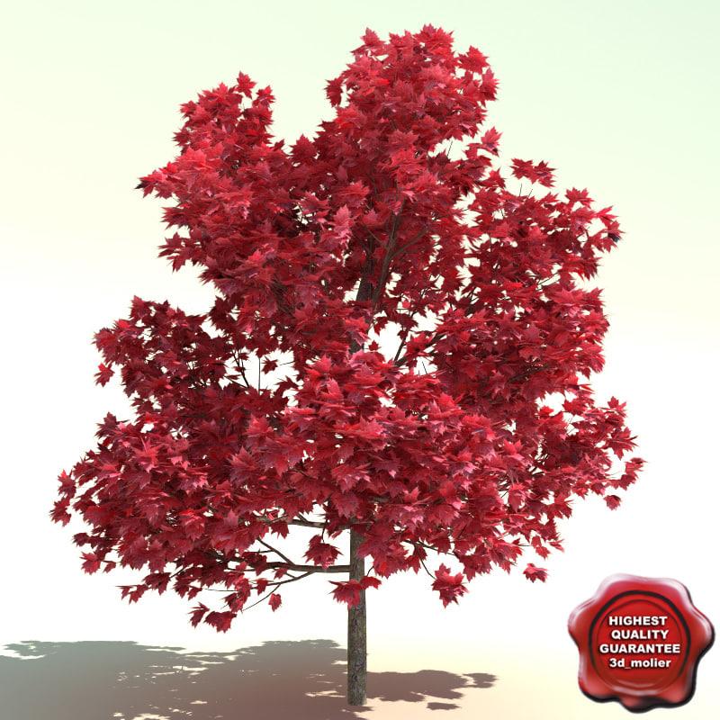 Acer_rubrum_Red_Sunset_0.jpg