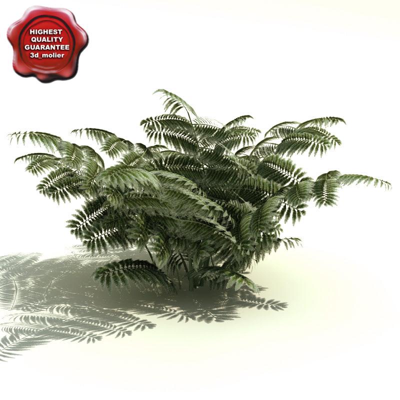 Athyrium_niponicum_Pictum_0.jpg