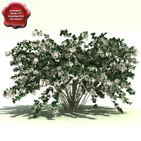 beauty bush 3D models