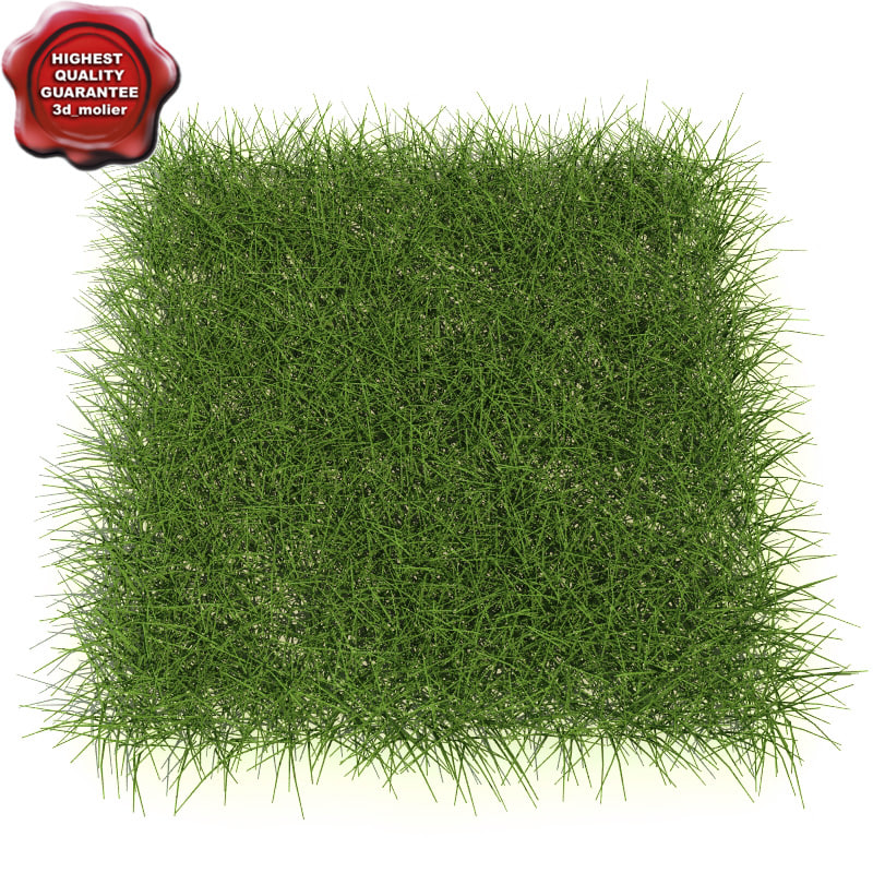 Mix_of_Grass_0.jpg