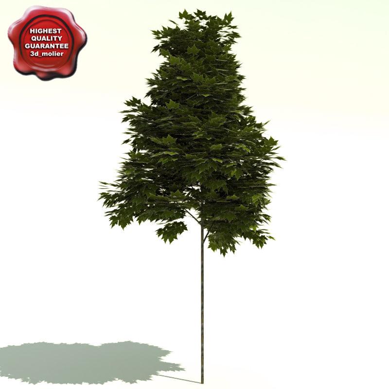 Platanus_x_acerifolia_0.jpg