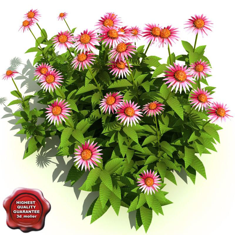 Echinacea_purpurea_0.jpg