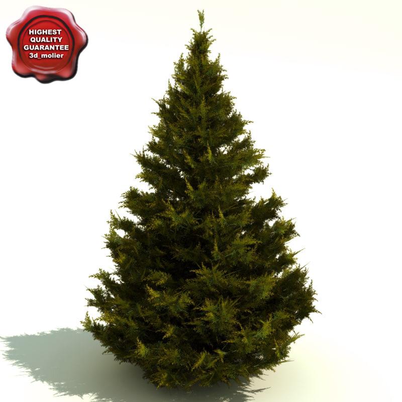 Juniperus_chinensis_0.jpg