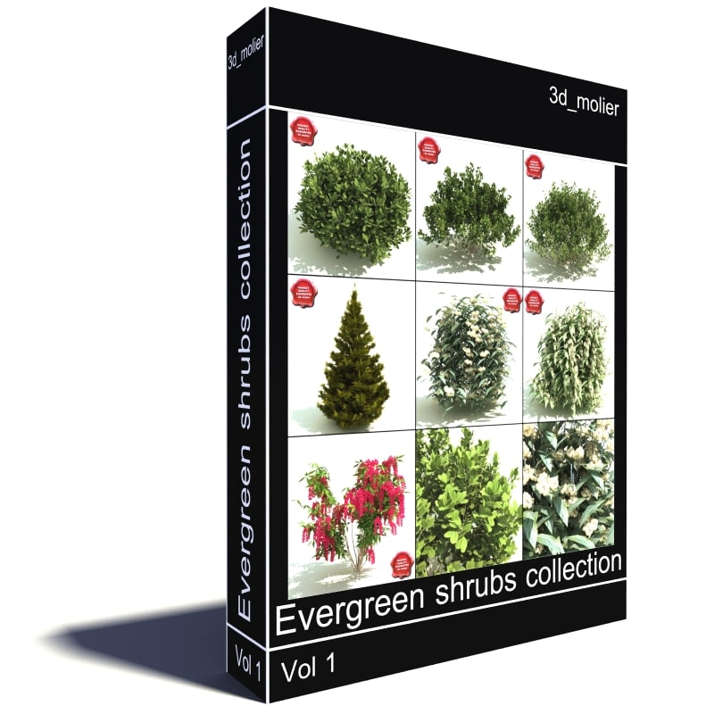 Evergreen_shrubs_collection_Main.jpg