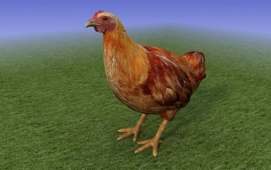 brown_chicken_3D Model_sample_02.jpg