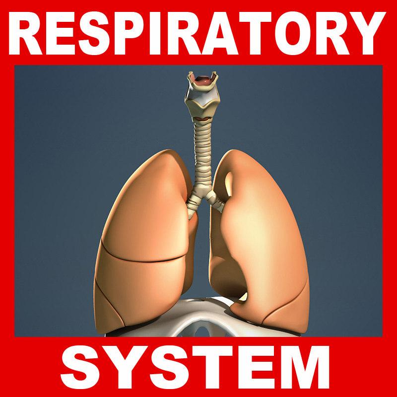 Respiratory_System.jpg