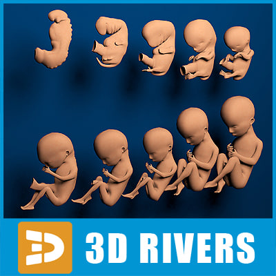 Human embryo development by 3DRivers 3D Models