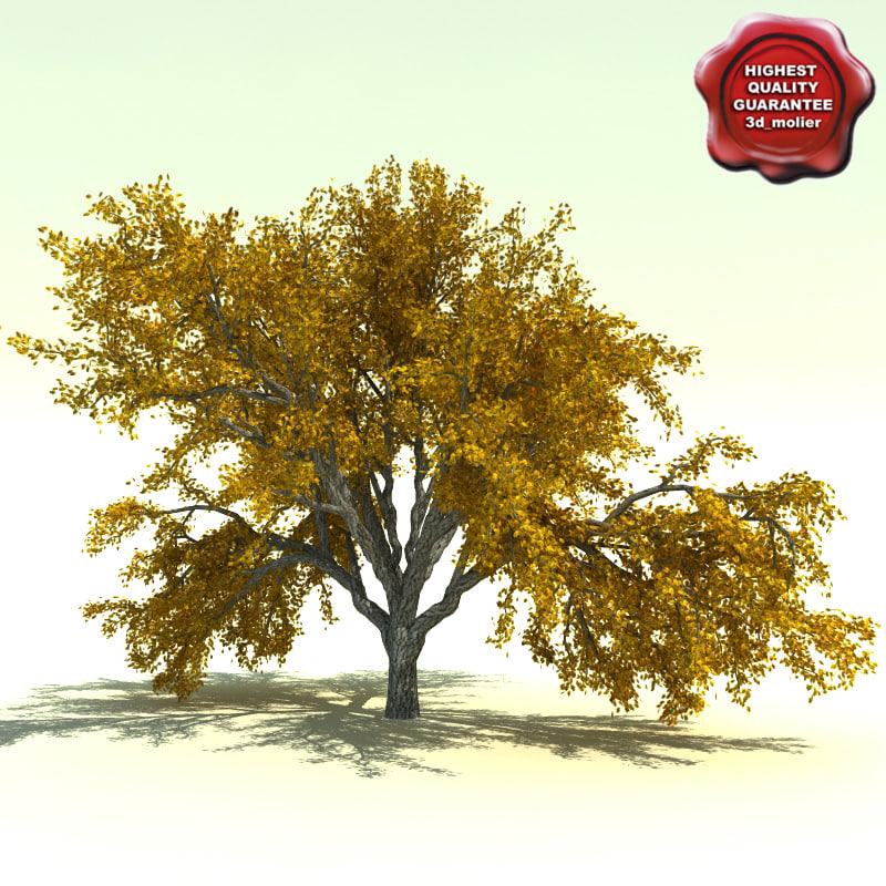 Quercus_Garryana_0.jpg
