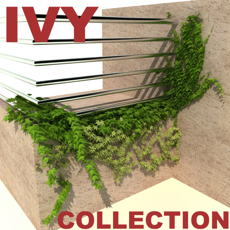 Ivy_collection_0.jpg