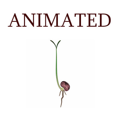seed animation 3D Models