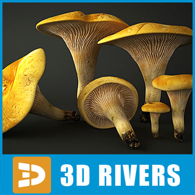 Chanterelle 02 by 3DRivers 3D Models