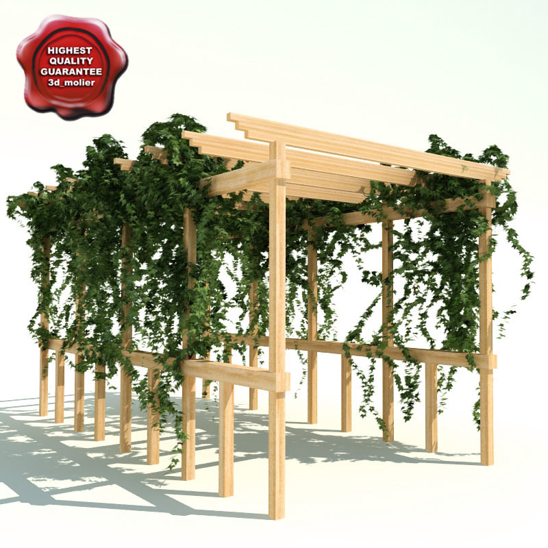 Pergola_path_with_ivy_0.jpg