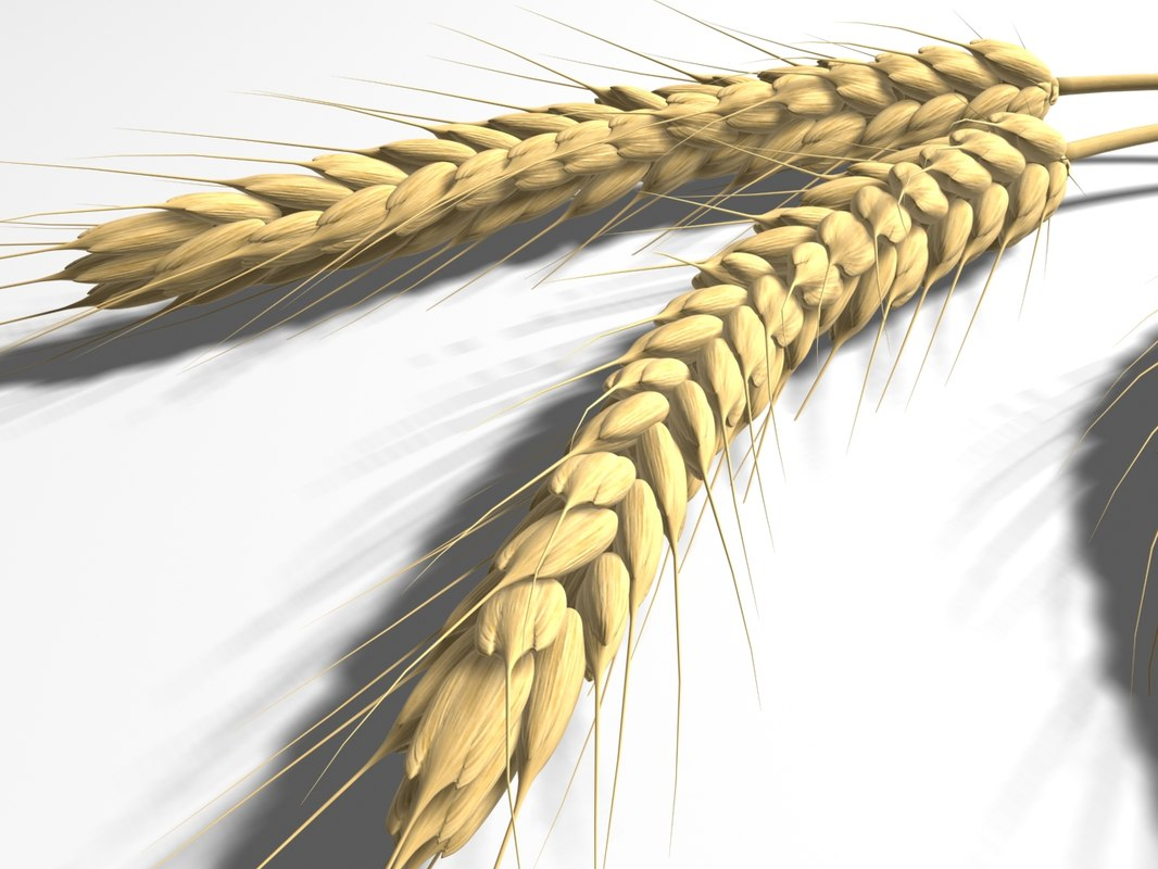 wheat_01.jpg